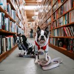 dogs in a libray: bibliography update March 2019